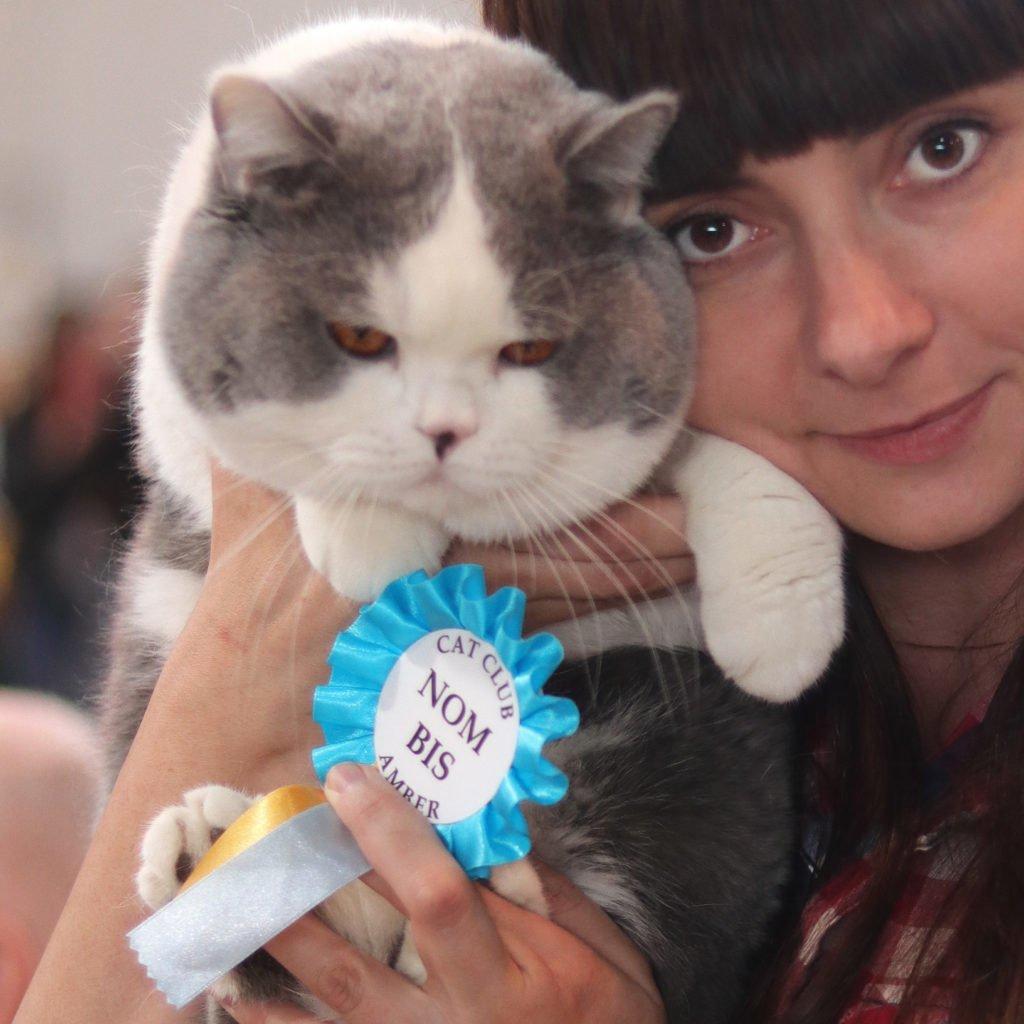 25 i 26 Międzynarodowa Wystawa Kotów Rasowych Sopot 30.06-.01.07.2018r