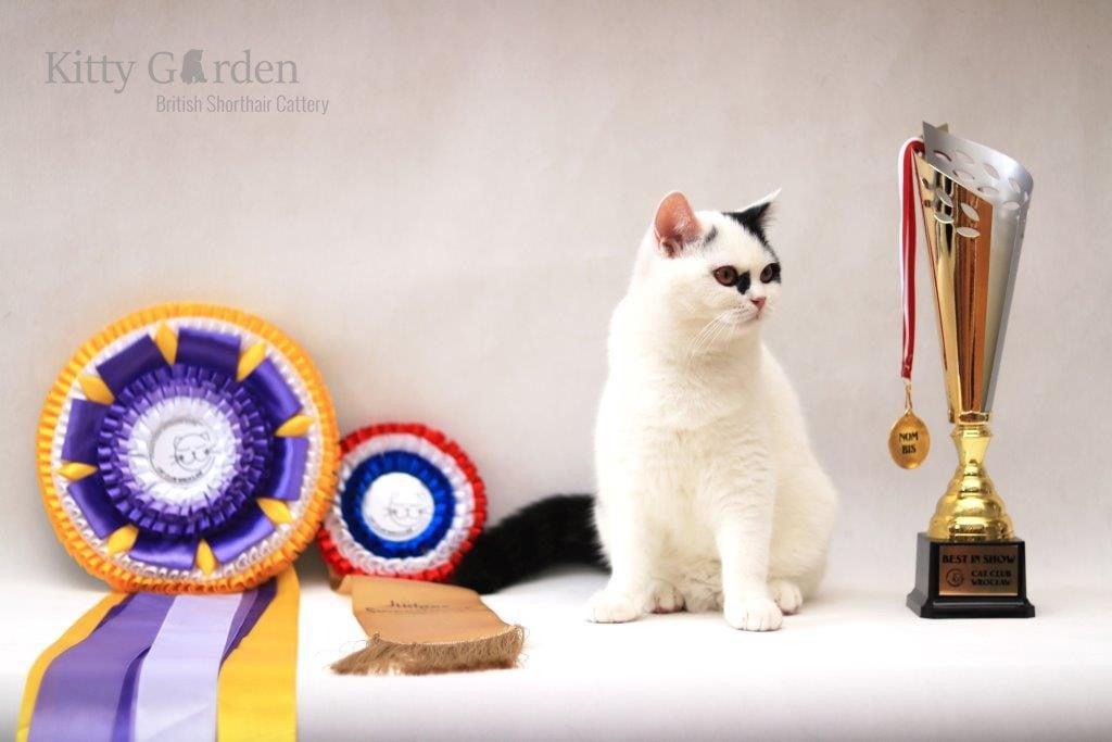 Easy to Love Kitty Garden*PL