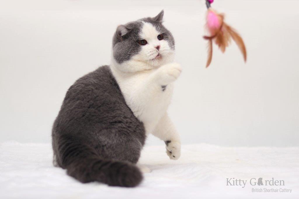 GIC Alpha Cesar Kitty Garden*PL