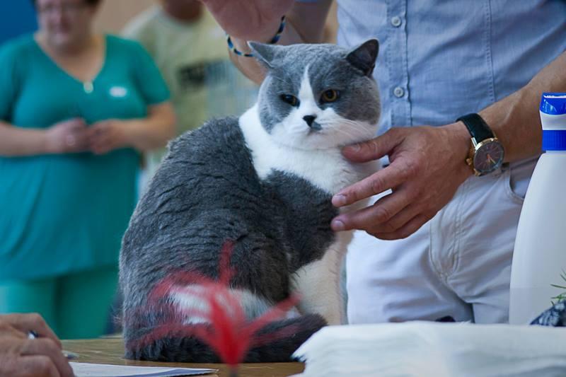LI i LII Międzynarodowa Wystawa Kotów Rasowych Ostrawa (Czechy) – 26-27.08.2017r