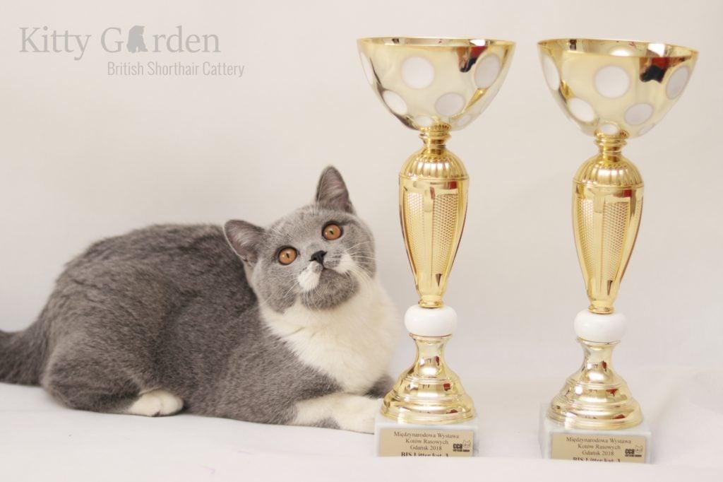 Międzynarodowa Wystawa Kotów Rasowych Gdańsk 03-04.02.2018r