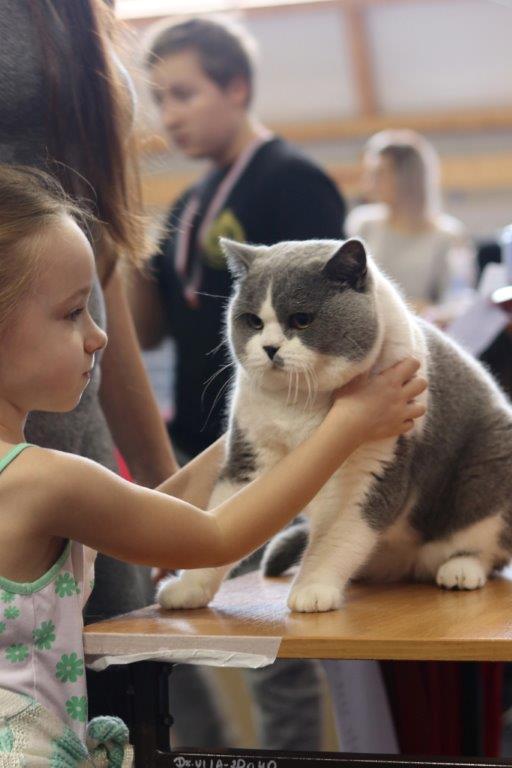 XXI i XXII Międzynarodowa Wystawy Kotów Rasowych Rybnik 21-22.10.2017r