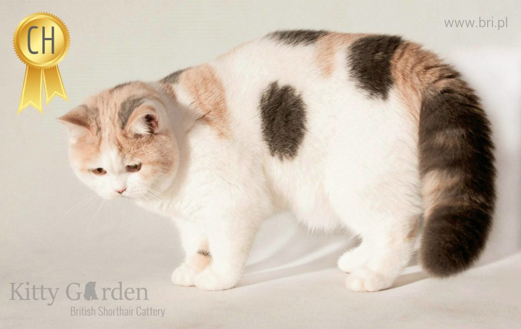 CH ALPHA ROSE Kitty Garden*PL – KASTRAT