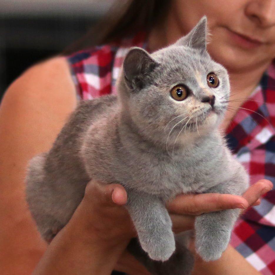 Sukcesy naszych kotów na wystawie w Sopocie!