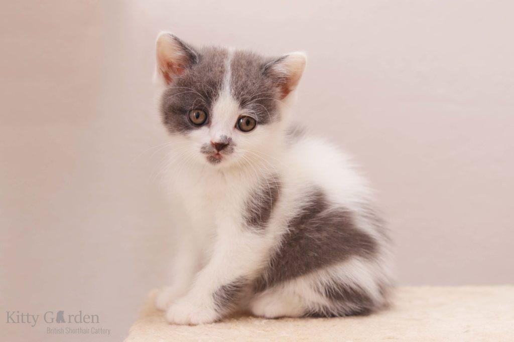 Mefisto Kitty Garden*PL