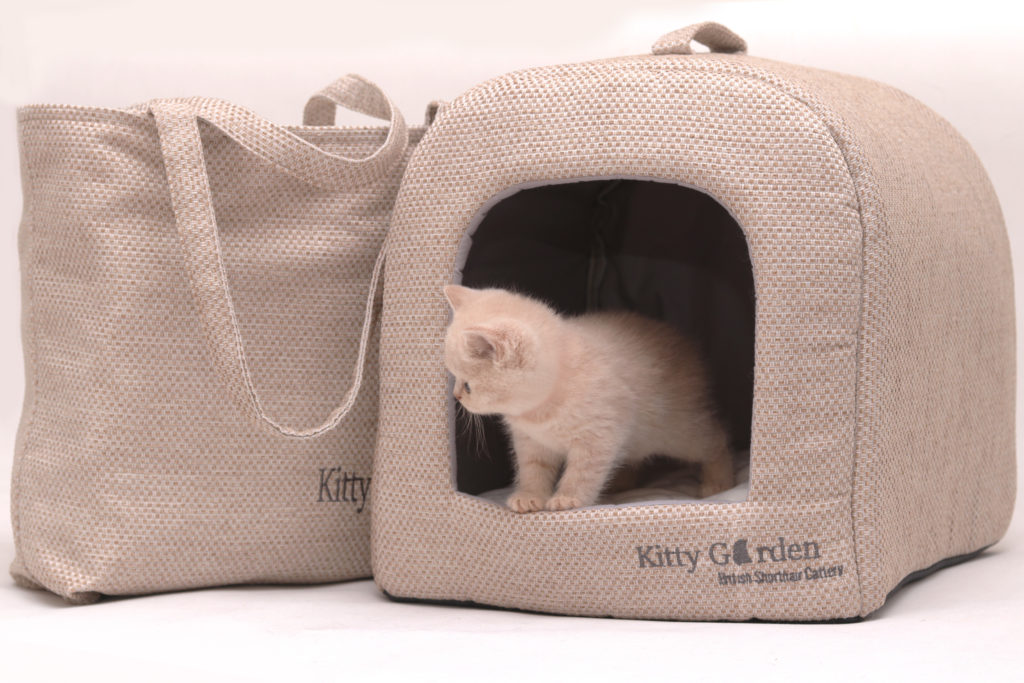Kocięta z Kitty Garden*PL